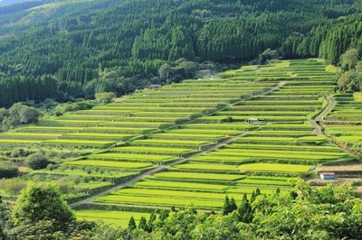 terraced rice fields.jpg